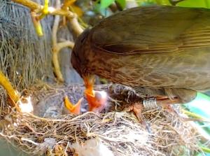 imagen nido